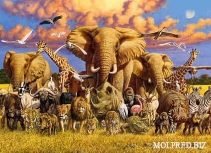 สัตว์ป่าสงวน สัตว์ทุกชนิดไม่ว่าสัตว์บก สัตว์น้ำ สัตว์ปีก แมลงหรือแมง โดยสภาพธรรมชาติย่อมเกิดและดำรงชีวิตอยู่ในป่าหรือในน้ำ และหมาย